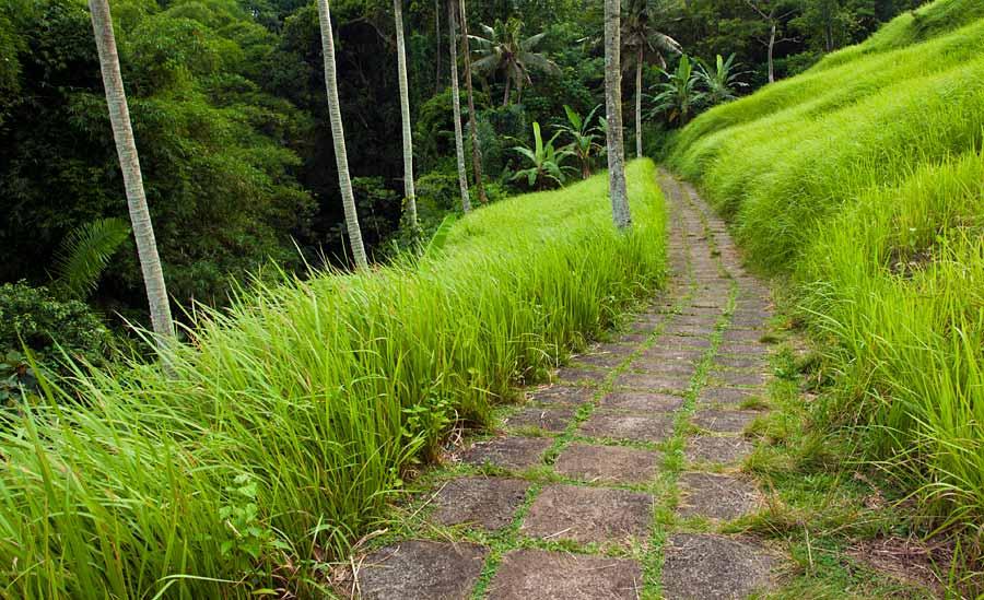 Campuan ridge walk