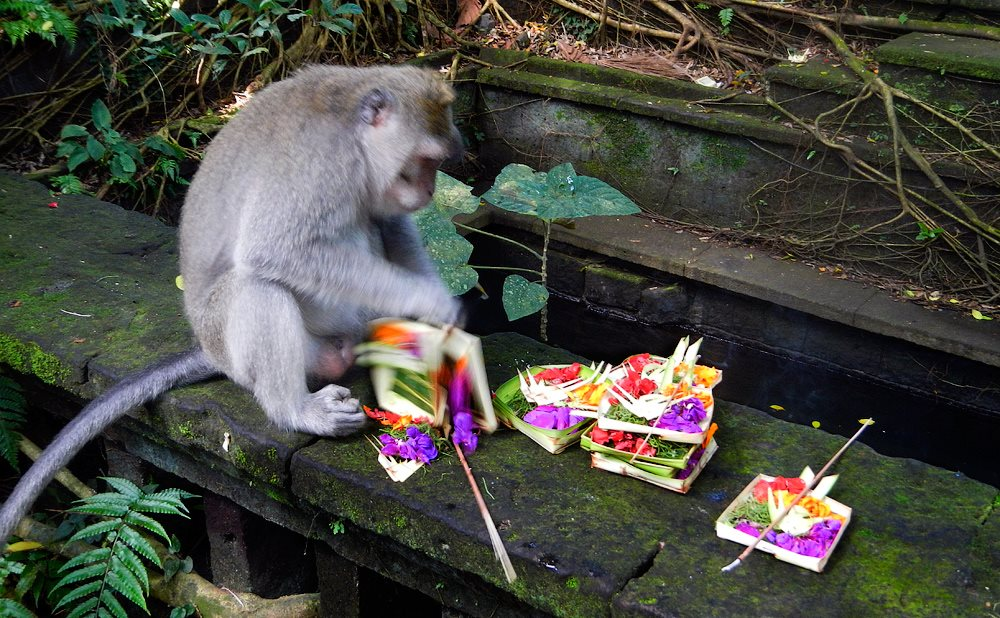 Monkey and offerings